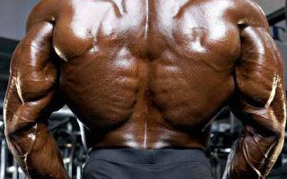 Лучшие упражнения для тренировки спины