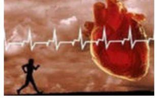Тренировка сердца и развитие выносливости организма