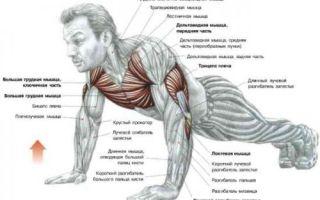 Упражнения для роста мышц груди