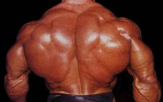 Как быстро накачать мышцы спины