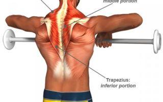 Упражнения для развития трапециевидных мышц