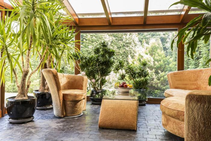 живые растения для увлажнения воздуха