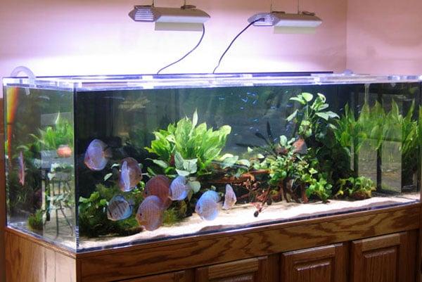 аквариум для увлажнения воздуха