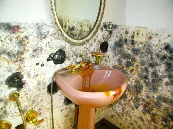 плесень в ванной комнате