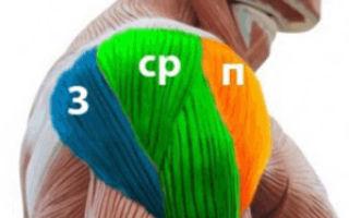 Правильный подход к прокачке дельтовидных мышц