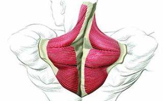 Шраги для трапециевидных мышц
