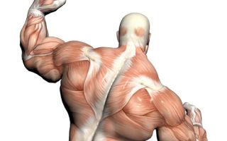 Регенерация мышц
