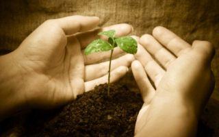 Что представляет собой благотворительность?